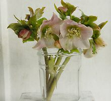 Bonne Maman Jar with Hellebores by Fiona Sami