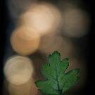 Dappled Light by geoff curtis