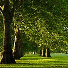 Hyde Park Green Alley by Themis