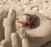 Hermit Crab in Hand by rosaliemcm