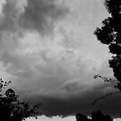 November storm 1 by Alex Evans