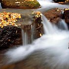 Leaves at the Brook by Forrest  Ray