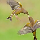 Greenfinches in flight by Margaret S Sweeny
