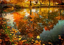 "WON the '""Autumn Glory"" new challenge for ""The Best of anything & Everything""' challenge of group 'THE BEST OF ANYT…'"