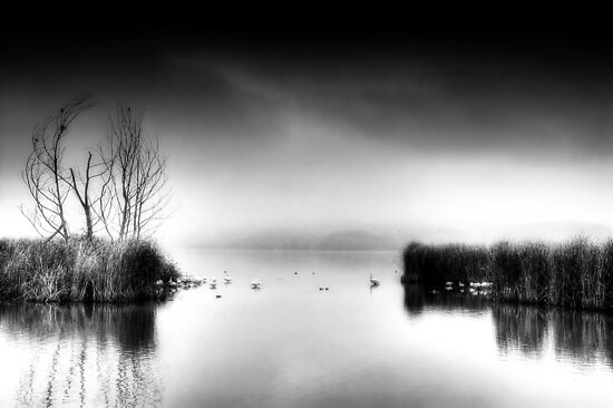 B&W Day... by Tania Koleska