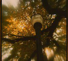it's the last light by Jill Auville