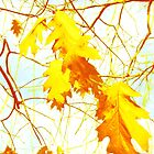 Autumn yellow leaves by cycreation