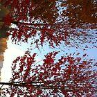 Rainbow & Trees-H... by Photos55