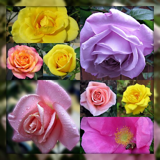 Just Roses Collage by MidnightMelody