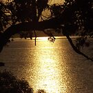 A Golden Sunrise at Redland Bay by CeciliaMay