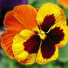 Amber and Gold Pansy (wall art) by kathrynsgallery