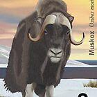 Alaska Musk Ox Postage by PSyborg57