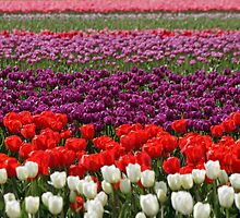 Rows Of Color by Debbie Stika