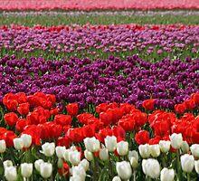 Rows Of Color by Debbie Stika