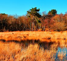 Studland - Across The Reeds.   by delros