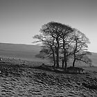 Henside Copse 01 - Yorkshire Dales, UK by Simon Lupton