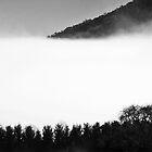 Blue Mountains, Australia by Sandy Taylor