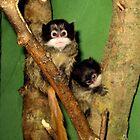 Monkeys by Abigail Langridge