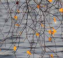 Golden Leaves by Lynn Wiles