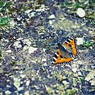 Butterfly 2 by Liev
