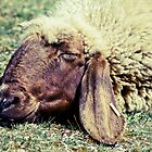 Sleeping Sheep by Liev