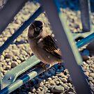 Sparrow 4 by Liev