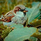Sparrow 6 by Liev