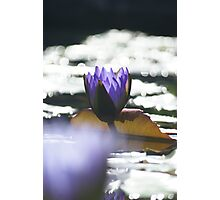Water Lily-2 Photographic Print