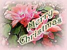 Merry Christmas Card - Christmas Cactus by MotherNature