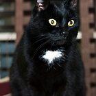 Brett's cats - secondly, Elly by Odille Esmonde-Morgan