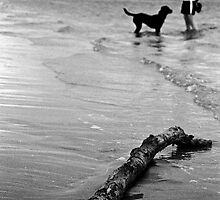 Dog Beach by Timmy Johnston