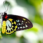 Vivid Butterfly by onehappycamper