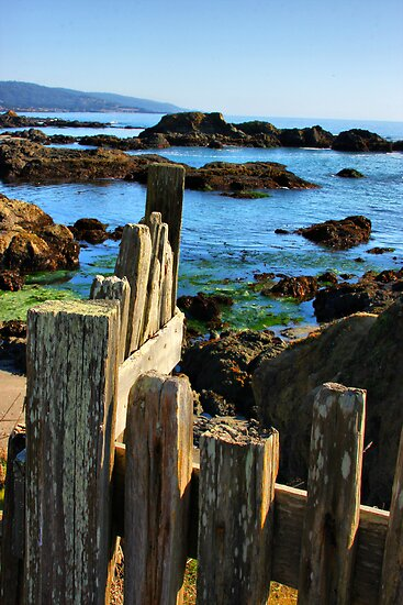 Sonoma Coast by Barbara  Brown