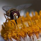 Hoverfly-flower fly by Gerrart