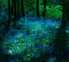 Bluebell Glade by brianallanson