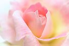 Purity & Love by Prasad