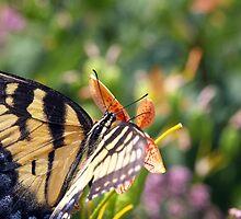 Tiger Swallowtail Garden by J. L. Gould