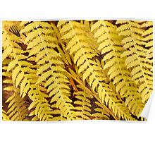 Fern leaves Poster