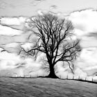 Tree Silhouette by Norman Dodds