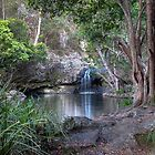 Kondalilla Falls National Park  Queensland  Australia by William Bullimore