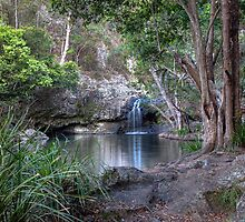 Kondalilla Falls National Park • Queensland • Australia by William Bullimore