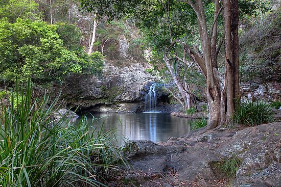 Kondalilla Falls National Park • Queensland • Australia by William Bullimore