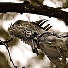 Iguana in Sayulita, Mexico, B&amp;W by Jessica Karran