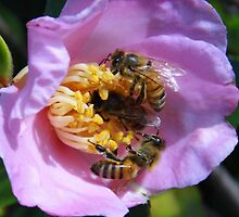 Bizzy Buzzy Beez by WildestArt