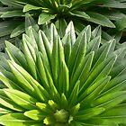 Green 3 by brozekcordier