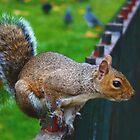 Squirrels Day Out 2 by Jarrod Kamelski