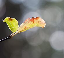 Green Leaves and Bokeh by Gary Chapple