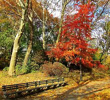 Central Park in Autumn, New York City  by Alberto  DeJesus