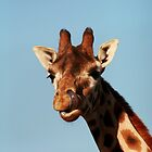 Photo of a Giraffe with its tongue up its nose! by Ian Marshall