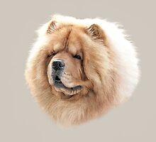 Chow Chow by StephDix